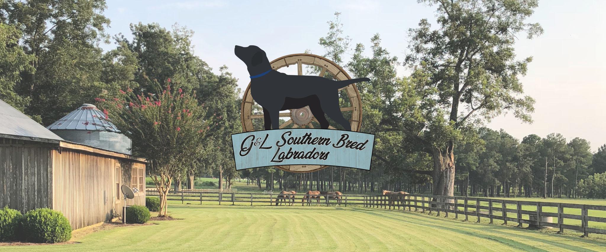G&L Southern Bred Labradors Logo
